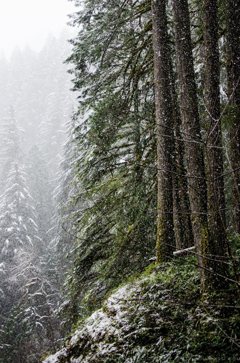 Epic Snowfall